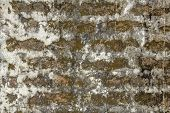 An Old Red Brick Wall With Thick Layers Of Light White Cement, Stains Of Dirt, Mold And Green Moss.  poster