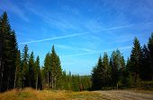 Forest landscape with spruce trees, dirt road and blue sky with aeroplane vapour trail, Nature of Sw poster