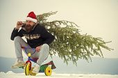 Excited Cyclist Shouting In Santa Hat And Sporty Wear. Happy Hipster Carrying Xmas Tree On White Sno poster