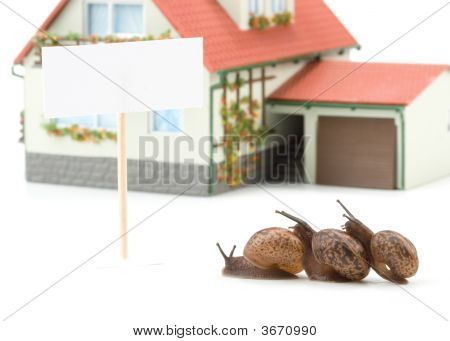 Garden Snail And Miniature House