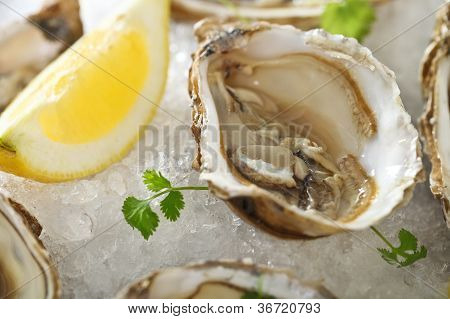 Fresh Oysters Platter Served In Ice