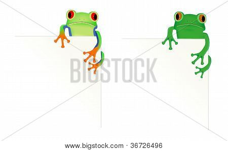 2 Frogs In Corner Of Page