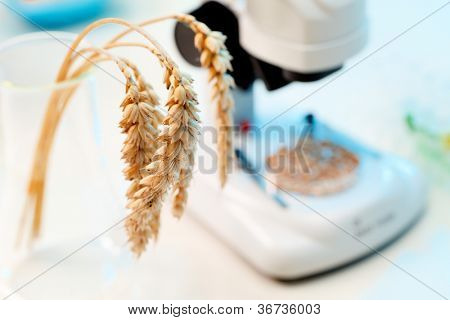 Control of cereal wheat GMO molecules, food control