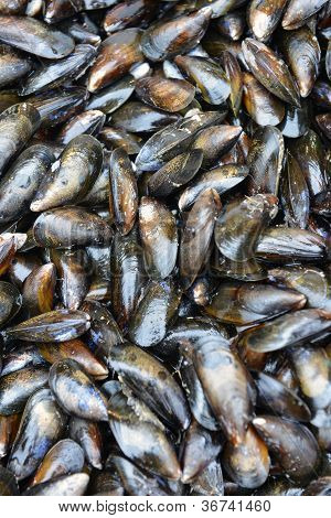 Mussels In The Store On Display