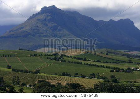 Winelands3