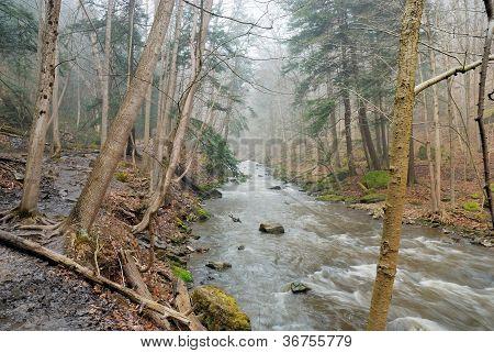 River Bank Image