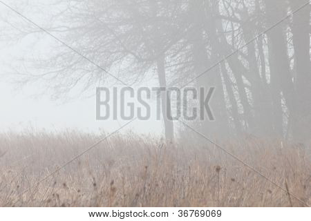 Foggy Willow Point Trail