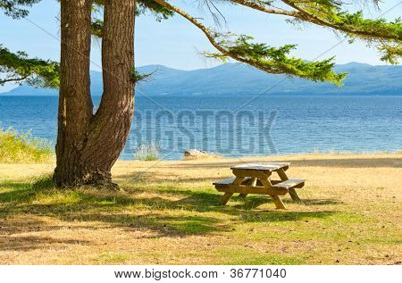 Picnic table in shade of double tree at the Palm Beach, Vancouver, Canada