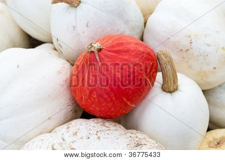 Orange Pumpkin On White Ones