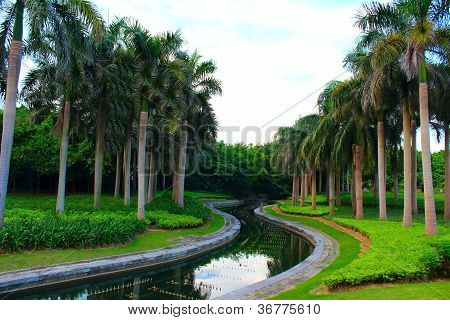Palm Trees And Stream