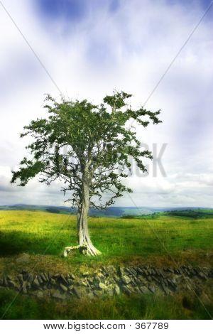 Moodytree