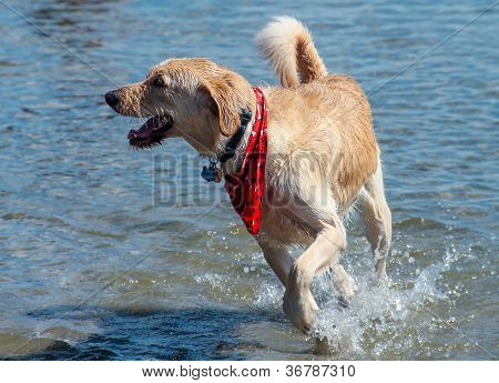 Dog's Play Time at the Lake