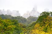 Foggy Day In Central Park, New York
