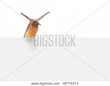 snail with space for your text.