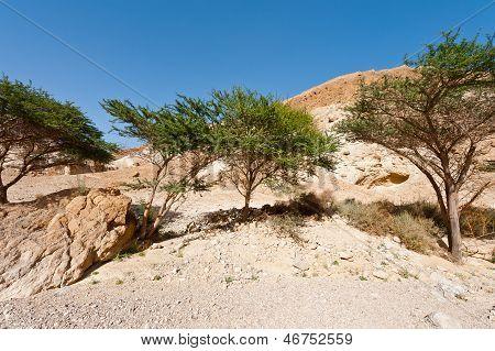 Spring Desert