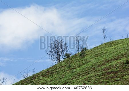 The Dead Tree On The Mountain Of Grass