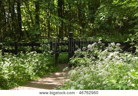 Entrance To Forest With Blooming Springflowers