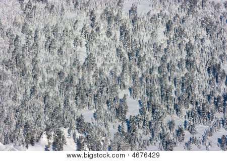 Forest In Winter, Shot From Above