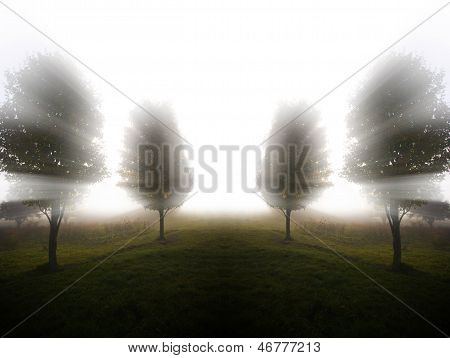 Digitally Manipulated Image Of Foggy Trees
