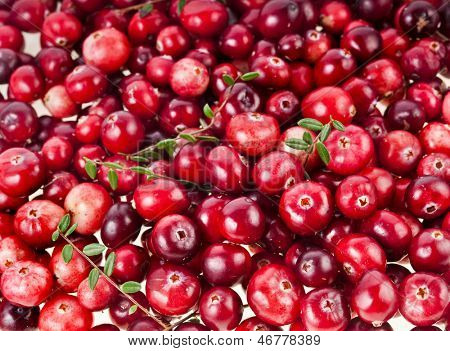 Fresh red cranberries with leaves surface background