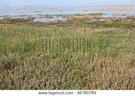 Saltmarsh On The Island Of Sylt In Spring
