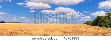 Panorama Wheat Field