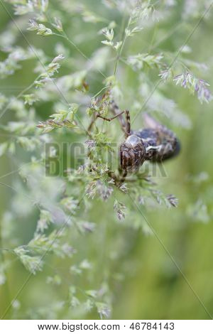 Dragonflies Exoskeleton