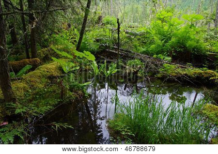 Forest Pond