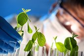 stock photo of genetic engineering  - Scientist examining samples with plants - JPG