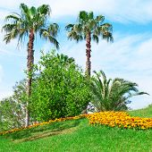 foto of swales  - Tropical palm trees in a beautiful park - JPG