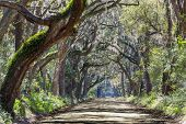 stock photo of backwoods  - Trees tunnel  - JPG