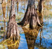 pic of tillandsia  - Landscapes in Everglades National Park - JPG