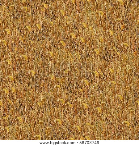 Bulrush seamless texture