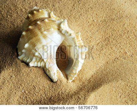 cockleshell on to sand