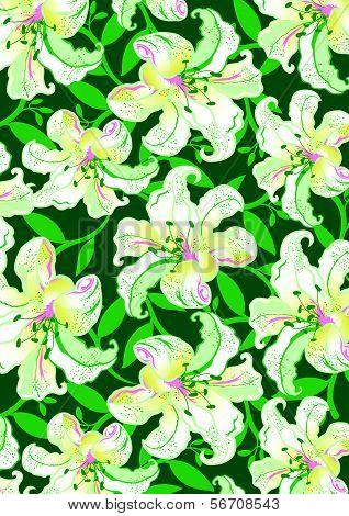 White Hibiscus.