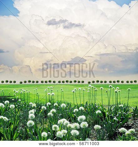 summery  landscape