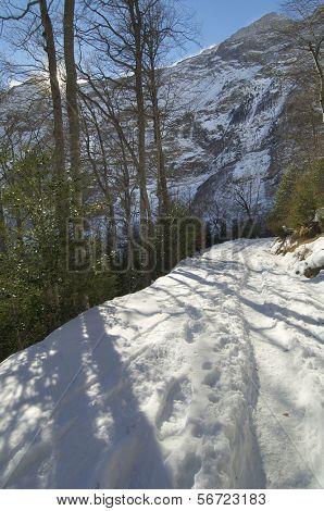 beech forest, Fagus sylvatica, in Pineta valley, Pyrenees, Spain