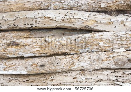 detail of a woodworm beams