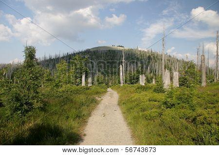 Mount Lusen