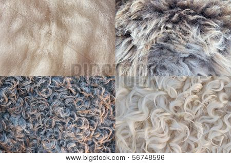 Four Sheepskin Backgrounds