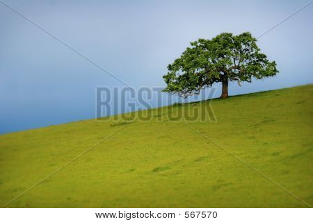 Tree And Hillside