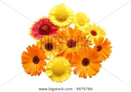 Flowers With Yellow Petals On A White Background