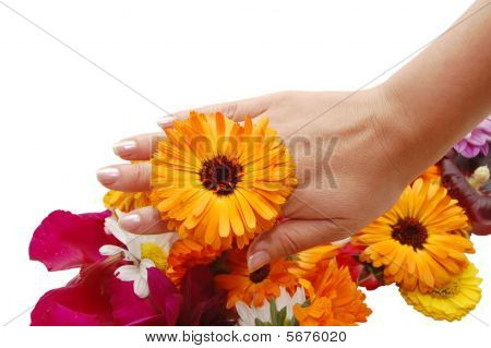 Female Hand With Beautiful Flowers On A White Background
