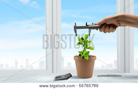 Conceptual image of green plant in pot