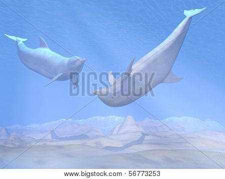 Dolphins playing underwater - 3D render