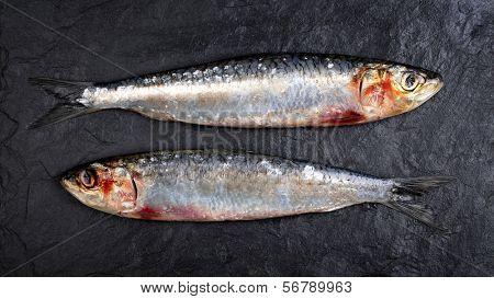 Fresh sardines on black slate background.