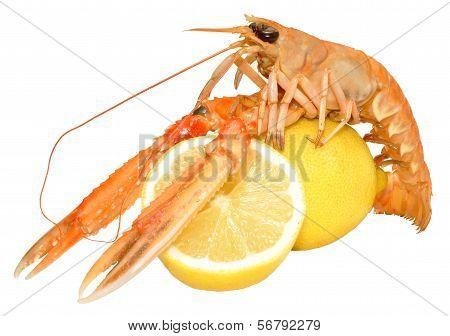 Langoustine Shellfish