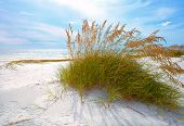 stock photo of dune grass  - Summer landscape with Sea oats and grass dunes on a beautiful Florida beach in late afternoon - JPG