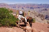 Horseman In The Grand Canyon