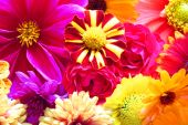 Beautiful Background From Perfect Fresh Flowers